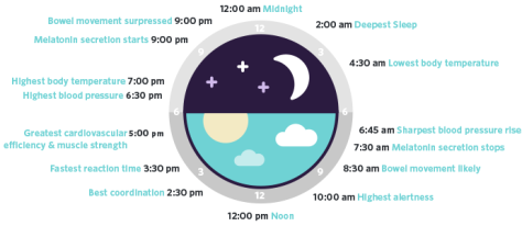 sleep-habits-circadian-rhythm